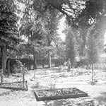 Photograph of Adalbert Fenyes' insectorium