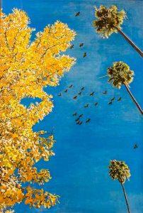 Pasadena Parrots by David Sikes