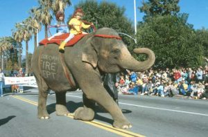 Elephant at Doo Dah Parade