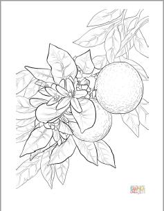 Orange Blossom coloring page